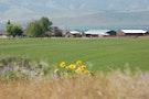 Ranch 2012 ne